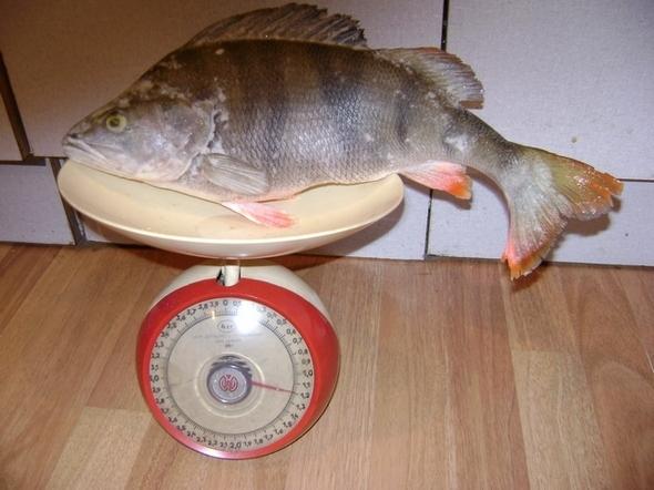 морда из фильтра для ловли рыбы