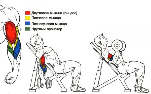 Как правильно выполнять упражнение.  Для этого установите спинку скамейки под углом 45 градусов.