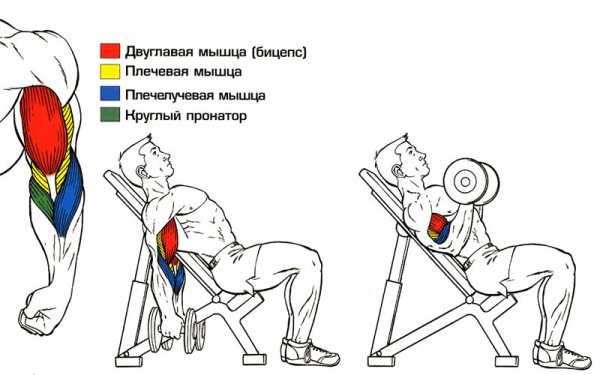 b Упражнения /b для бодибилдинга - b Как /b.