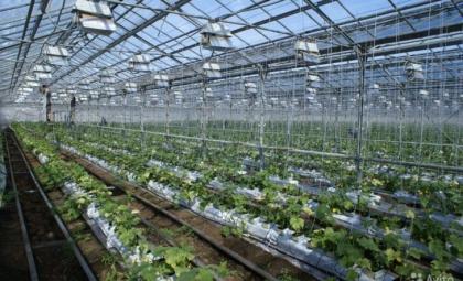 Кубаньэнерго присоединило 69 новых потребителей производства, АПК и соцобъектов в Адыгейском энергорайоне