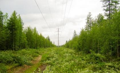 Усть-Лабинские электрические сети завершают расчистку трас ВЛ