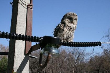 В западном Оренбуржье сотрудники Оренбургэнерго установят 1104 птицезащитных устройства