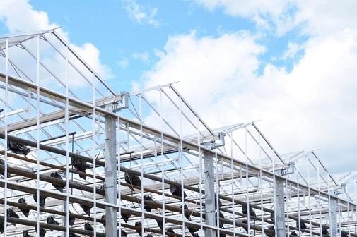 ФСК ЕЭС обеспечит электроэнергией крупнейший тепличный комплекс Смоленской области